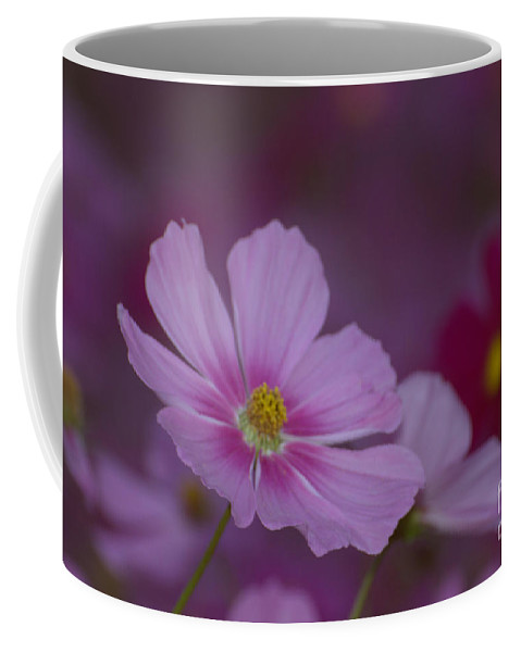 Wildflower Coffee Mug featuring the photograph Soft And Gentle by Donna Brown