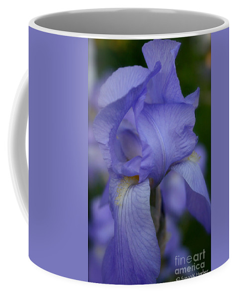 Outdoors Coffee Mug featuring the photograph Soft Petals by Susan Herber