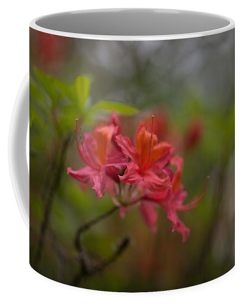 Rhodies Coffee Mug featuring the photograph Soft Red Rhodies by Mike Reid