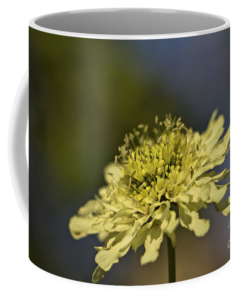 Yellow Coffee Mug featuring the photograph Soft Yellow. by Clare Bambers