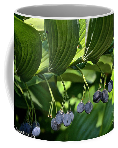 Outdoors Coffee Mug featuring the photograph Soloman's Seal by Susan Herber