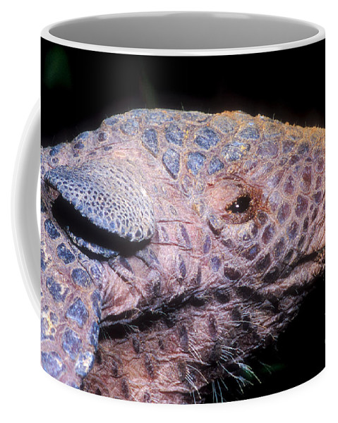 Southern Naked-tail Armadillo Coffee Mug featuring the photograph Southern Naked-tail Armadillo by Dante Fenolio