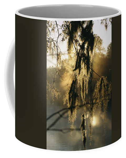 United States Of America Coffee Mug featuring the photograph Spanish Moss Hanging From A Tree Branch by Medford Taylor