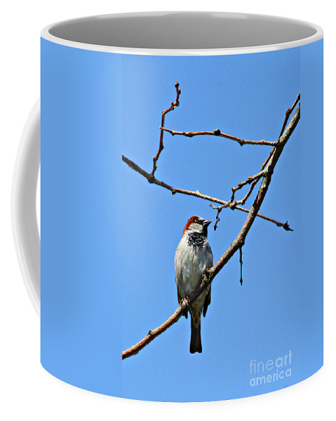 Birds Coffee Mug featuring the photograph Sparrow On The Branch by Randy Harris