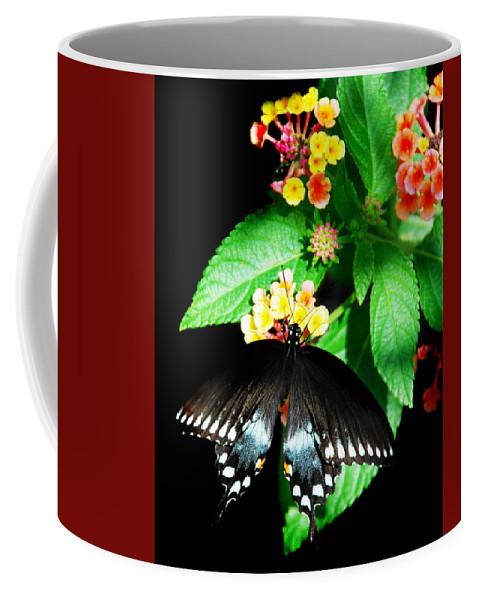 Spice Bush Coffee Mug featuring the photograph Spice Bush Swallowtail by Skip Willits