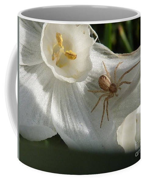 Spider Coffee Mug featuring the photograph Spider In Narcissus by Rain Shine
