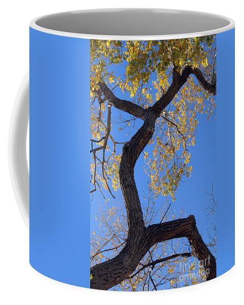 Poster Coffee Mug featuring the photograph Splinter Sprinter by Alycia Christine