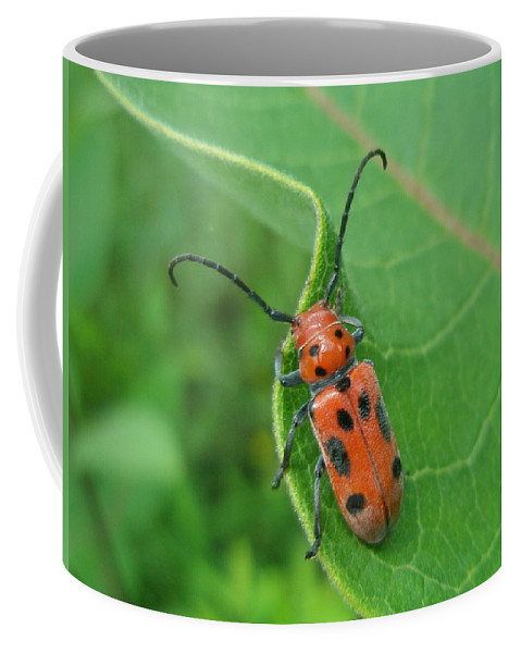 Beetle Coffee Mug featuring the photograph Spotted Asparagus Beetle - Crioceris Duodecimpunctata by Mother Nature