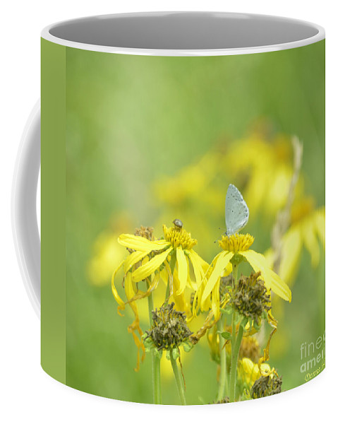 Insect Coffee Mug featuring the photograph Spring Azure And Friend by Donna Brown