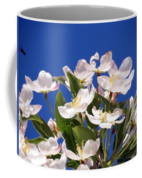 Flower Coffee Mug featuring the photograph Spring Blossoms by Darleen Stry