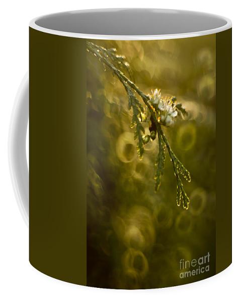 Spring Coffee Mug featuring the photograph Spring In My Garden by Angel Ciesniarska