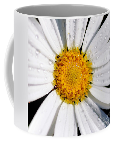 Photography Coffee Mug featuring the photograph Square Daisy - Close Up by Kaye Menner