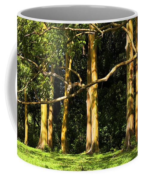 Eucalyptus Coffee Mug featuring the photograph Stand Of Rainbow Eucalyptus Trees by Marilyn Hunt