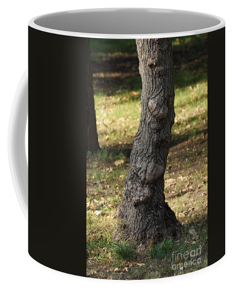 Tree Coffee Mug featuring the photograph Standing Tall by Lori Tordsen
