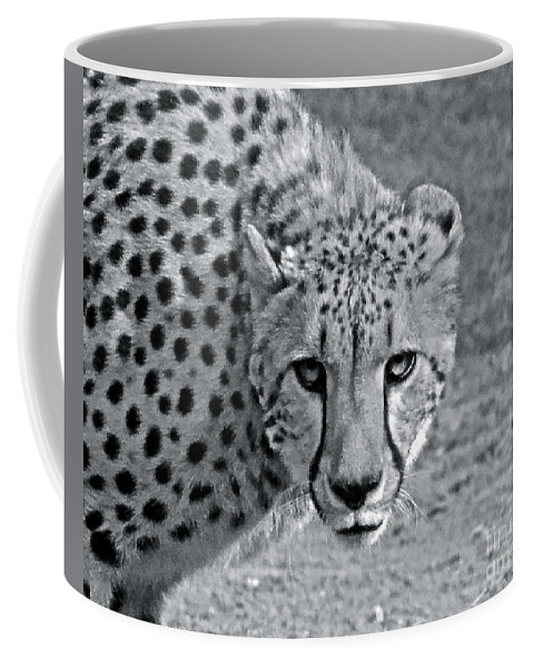 Cheetah Coffee Mug featuring the photograph Staring Contest by Carol Bradley