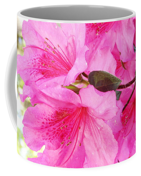 A Moment In Time Coffee Mug featuring the photograph Stay by Priscilla Richardson