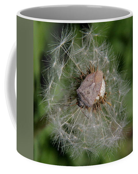 Stink Bug Coffee Mug featuring the photograph Stink Bug On Dandelion Seed Head by Doris Potter