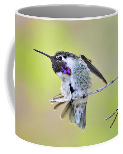 Costa's Hummingbird Coffee Mug featuring the photograph Stretch by Saija Lehtonen