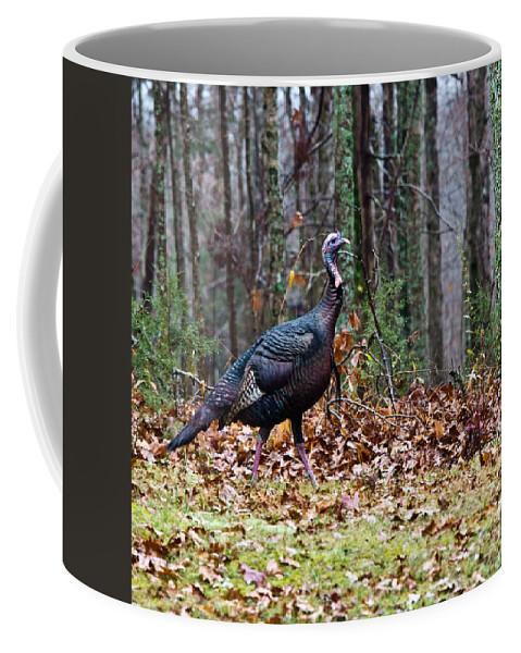 Tom Coffee Mug featuring the photograph Strutting Turkey by Douglas Barnett