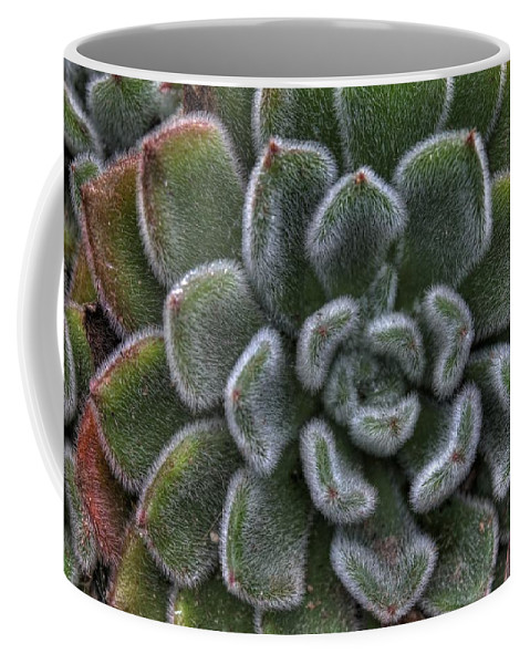 Succulent Coffee Mug featuring the photograph Succulent by Jane Linders