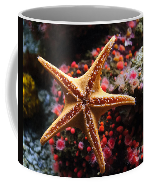 Starfish Coffee Mug featuring the photograph Sucker Starfish by Diego Re