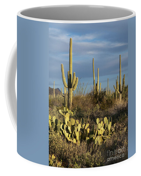 Landscape Coffee Mug featuring the photograph Suguaros At Sunset by Sandra Bronstein