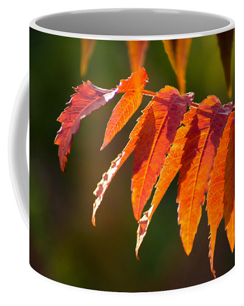 Fall Coffee Mug featuring the photograph Sumac In The Sun by Bill Pevlor