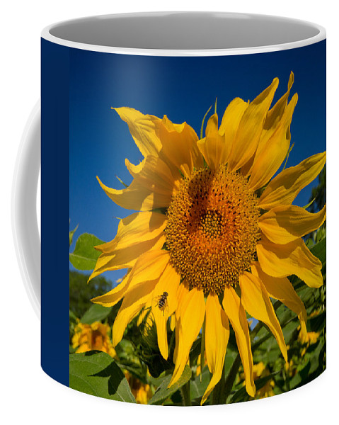 Sunflower Coffee Mug featuring the photograph Summer by Mircea Costina Photography