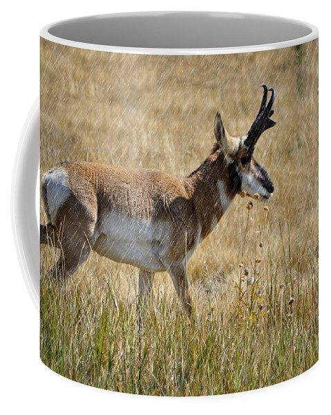 Pronghorn Coffee Mug featuring the photograph Summer Pronghorn Rain by Donna Greene