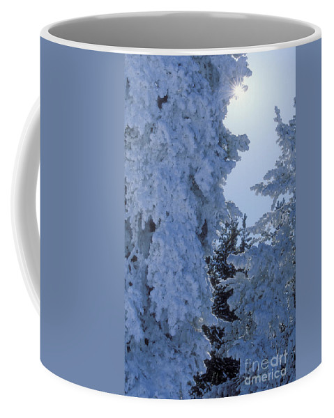Yellowstone National Park Coffee Mug featuring the photograph Sunburst In Yellowstone by Sandra Bronstein