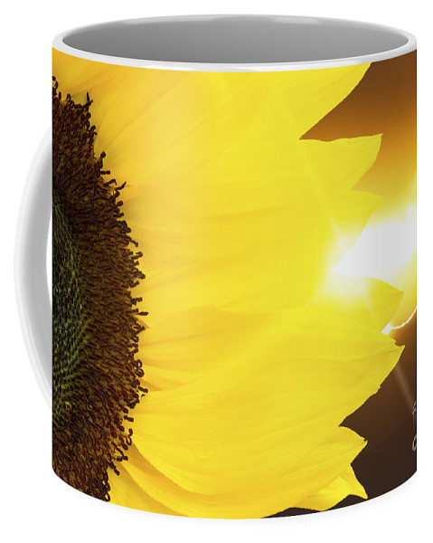 Sunflower Coffee Mug featuring the photograph Sunflower And Sunset by Simon Bratt Photography LRPS