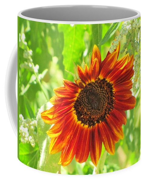 Sunflowers Coffee Mug featuring the photograph Sunflower Beauty by Michelle Cassella