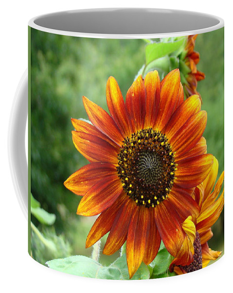 Red Sunflower Coffee Mug featuring the photograph Sunflower by Lisa Rose Musselwhite