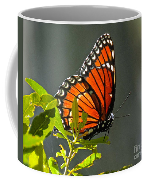 Butterfly Coffee Mug featuring the photograph Sunlight Viceroy by Carol Bradley
