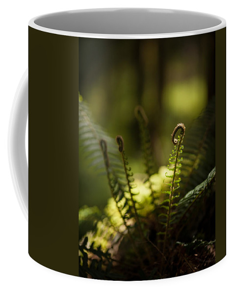 Olympic National Park Coffee Mug featuring the photograph Sunlit Fiddleheads by Mike Reid