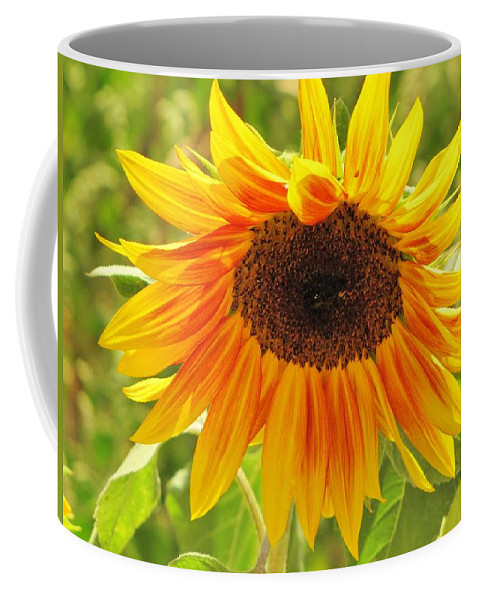 Sunflowers Coffee Mug featuring the photograph Sunny Bright Sunflower by Michelle Cassella