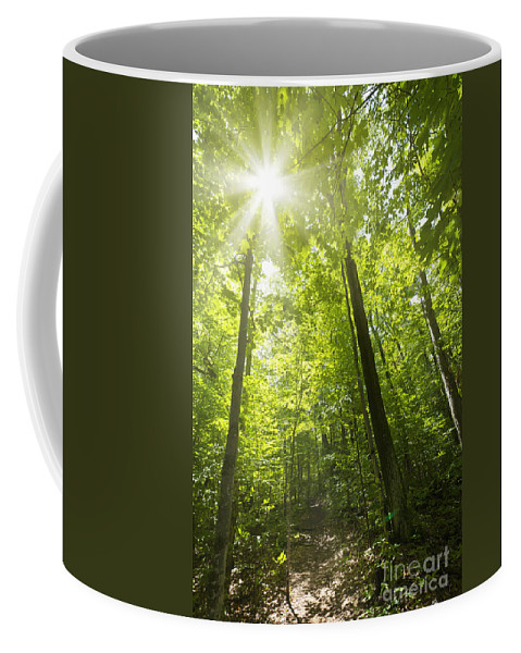 Trees Coffee Mug featuring the photograph Sunny Forest Path by Elena Elisseeva