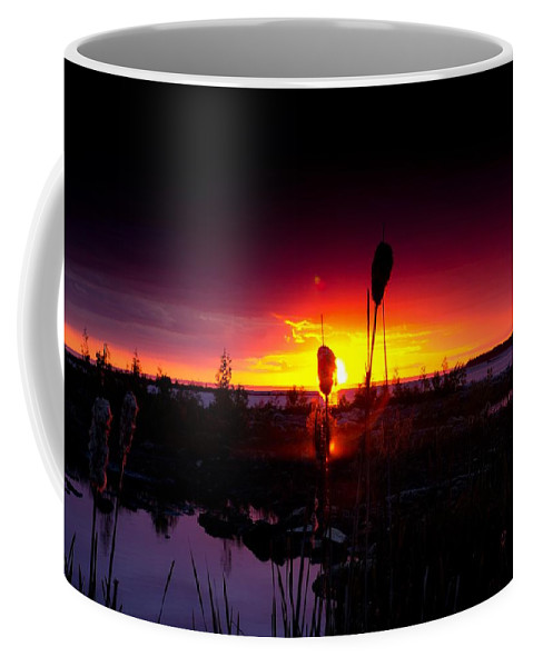 Cat Tail Coffee Mug featuring the photograph Sunset Cat Tail by Cale Best
