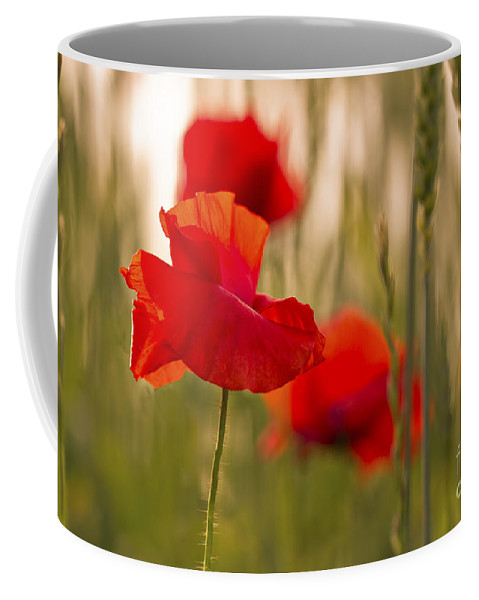 Poppy Coffee Mug featuring the photograph Sunset Poppies. by Clare Bambers