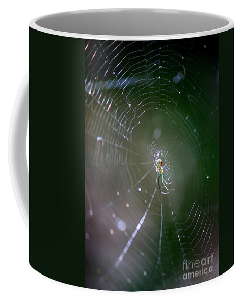 Swamp Spider Coffee Mug featuring the photograph Sunshine On Swamp Spider by Carol Groenen