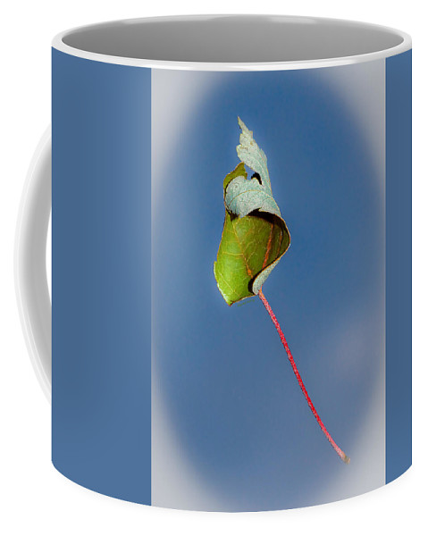 Leaf Coffee Mug featuring the photograph Suspended In Air by DigiArt Diaries by Vicky B Fuller