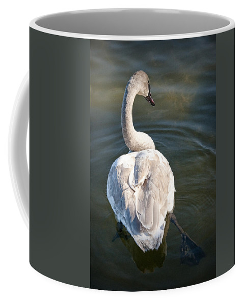 Art Coffee Mug featuring the photograph Swan On Evergreen Lake At Kellogg Bird Sanctuary No.0014 by Randall Nyhof