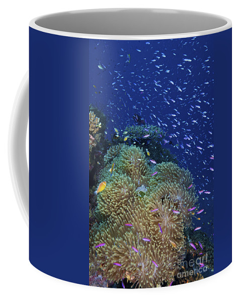 Sea Anemone Coffee Mug featuring the photograph Swarms Of Small Baitfish Swim by Terry Moore
