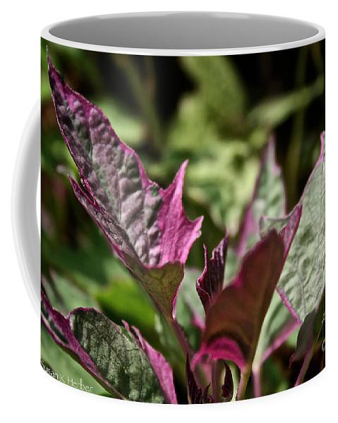 Plant Coffee Mug featuring the photograph Sweet Potato Vine by Susan Herber