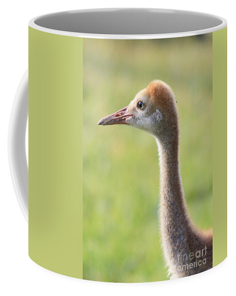 Sandhill Crane Chick Coffee Mug featuring the photograph Sweet Sandhill Face by Carol Groenen