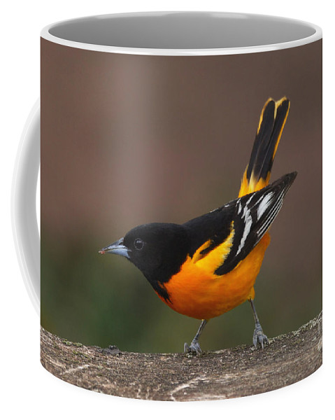 Oriole Coffee Mug featuring the photograph Take A Bow by Lori Tordsen