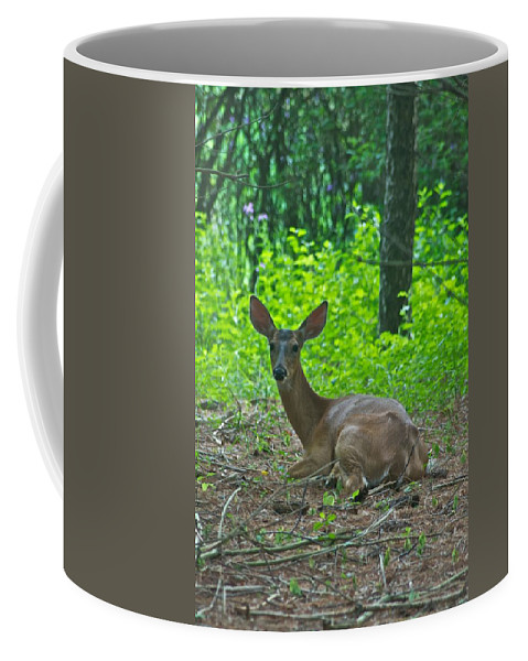 Animal Coffee Mug featuring the photograph Taking A Break 7388 1776 by Michael Peychich
