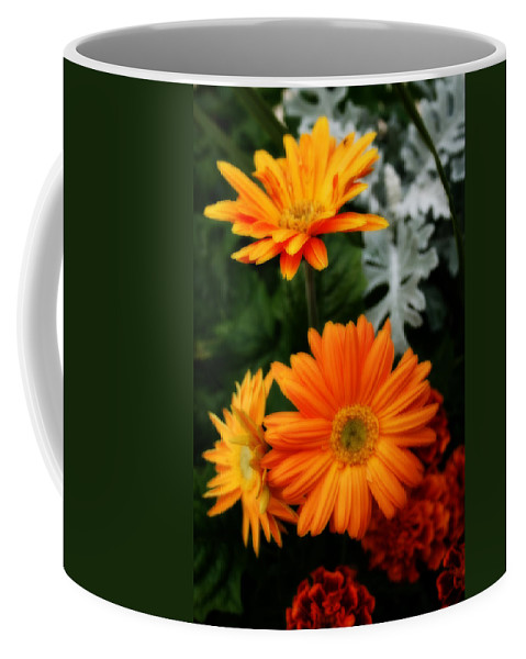Nature Coffee Mug featuring the photograph Tangerine Colored Gerbera Daisies by Kay Novy