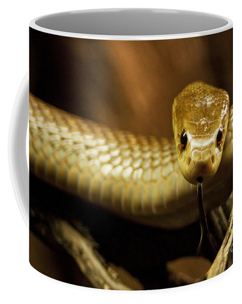Snake Coffee Mug featuring the photograph Tempter by Andrew Paranavitana