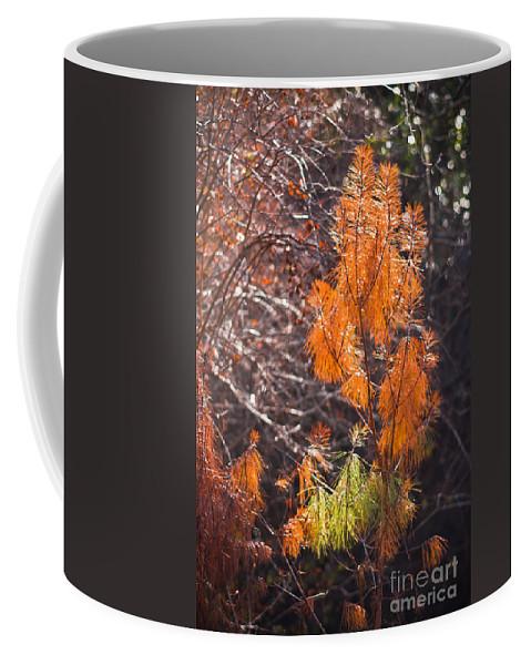 Fall Coffee Mug featuring the photograph Texas Orange by Kim Henderson